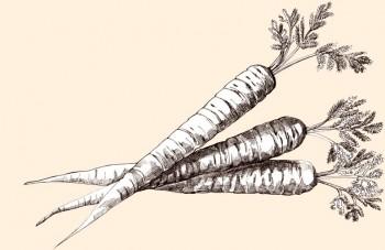 Cenoura O vegetal versátil do qual não podemos prescindir. Contém caroteno e outros nutrientes e fibras benéficos. Parte do nosso GARDEN PACK.
