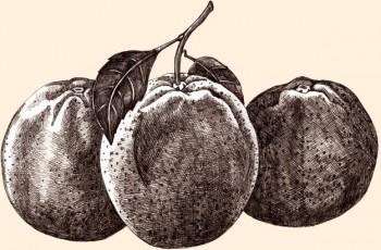 Laranjas Ricas em vitamina C natural. São parte do nosso FRUIT PACK.