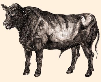 Precisamos dizer mais? A melhor carne de vaca que podemos encontrar. O orgulho da Escócia.