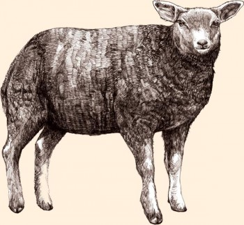 O borrego britânico criado ao ar livre é o principal ingrediente da refeição ESTATE LIVING.